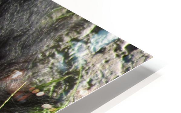 Gorilla Headache HD Sublimation Metal print