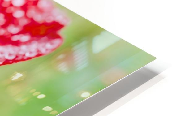 Raindrops and Roses HD Sublimation Metal print