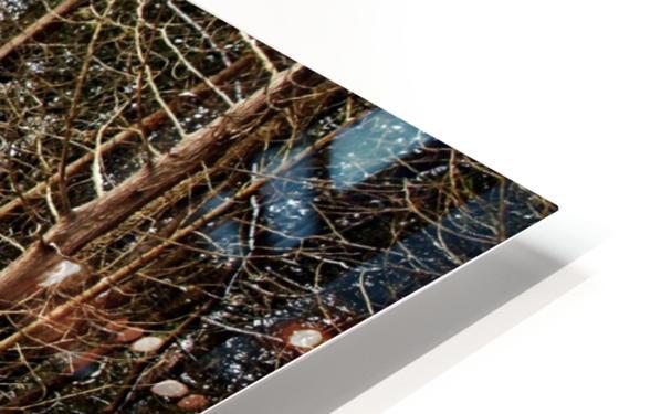 Fall Beech Trees HD Sublimation Metal print