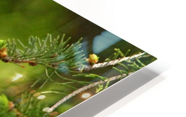 Goldfinch On The Disappearing Line HD Sublimation Metal print