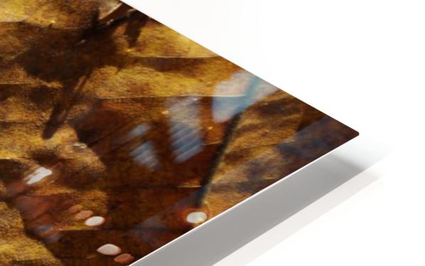 Close-up view of dried leaf HD Sublimation Metal print