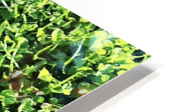 Grassy Wonderland HD Sublimation Metal print