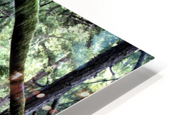 Rainforest HD Sublimation Metal print