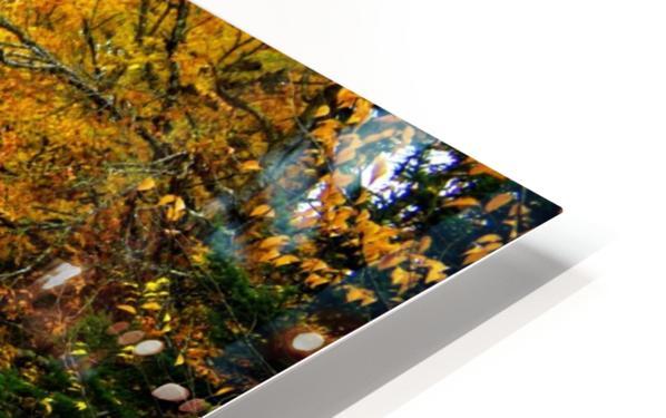10.9.18 Fall HD Sublimation Metal print