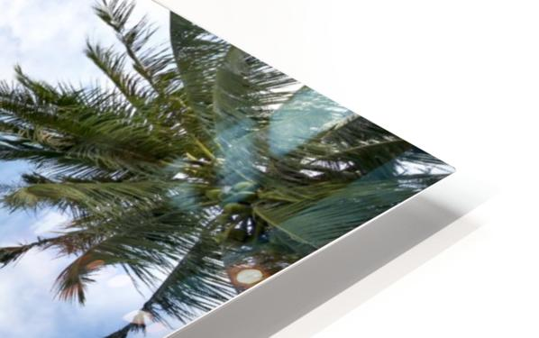 palm trees, sky, palms, background, summer, tropical, nature, holidays, travel, paradise, outdoors, HD Sublimation Metal print