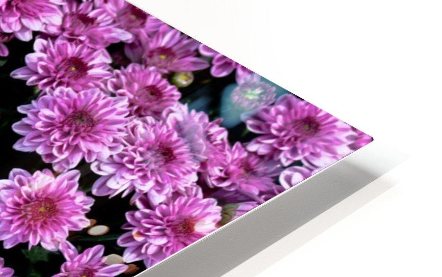 Purple flower HD Sublimation Metal print