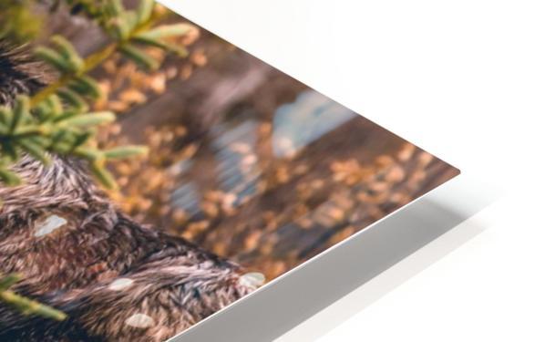 Bull Moose HD Sublimation Metal print