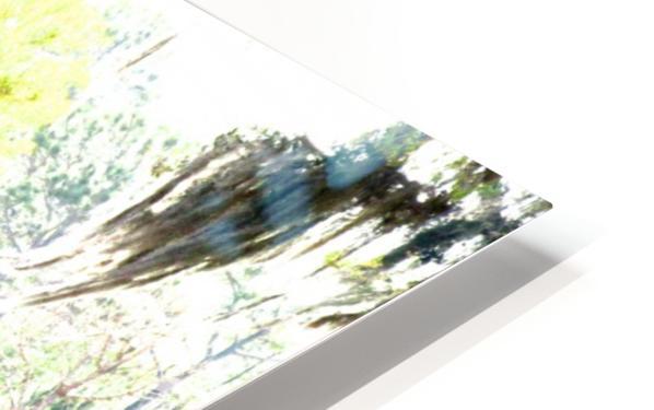 IMG_0120 HD Sublimation Metal print