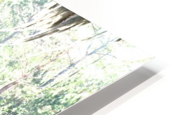 IMG_0121 HD Sublimation Metal print
