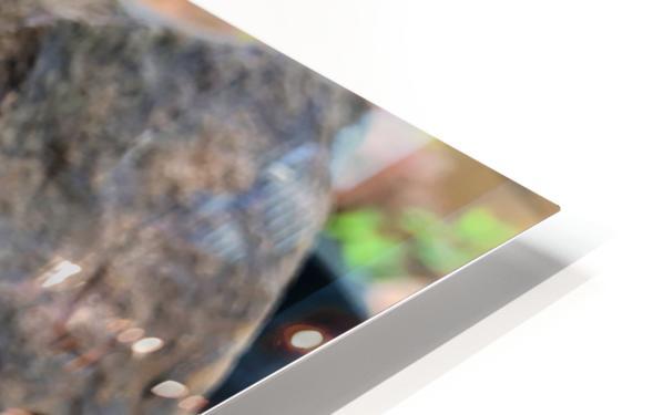 Caterpillar HD Sublimation Metal print