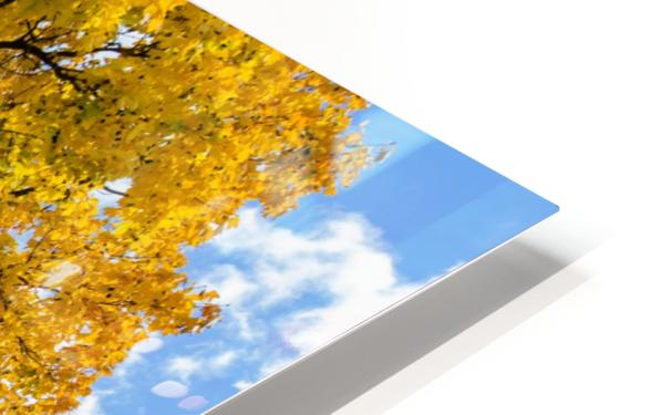 Autumn HD Sublimation Metal print