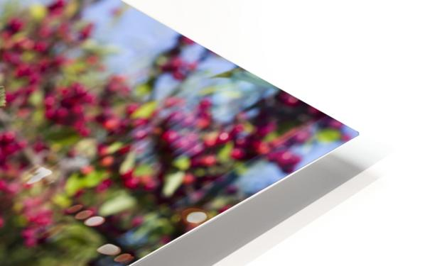 Sumac Bush in Autumn 2 HD Sublimation Metal print
