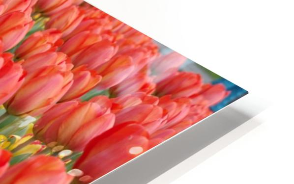Tullip Bed 7 HD Sublimation Metal print