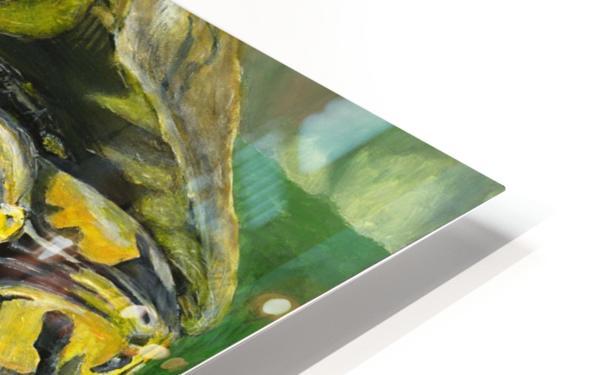 Box Turtle HD Sublimation Metal print