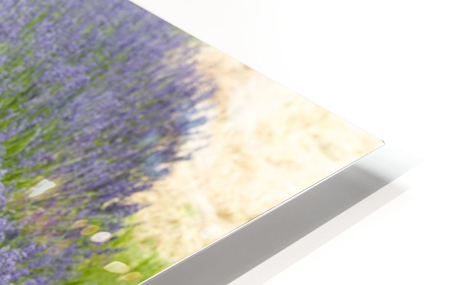 Lavender plants 7 HD Sublimation Metal print