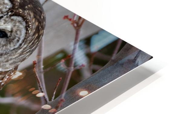 Barred Owl HD Sublimation Metal print