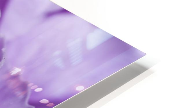 Purple Carnation HD Sublimation Metal print