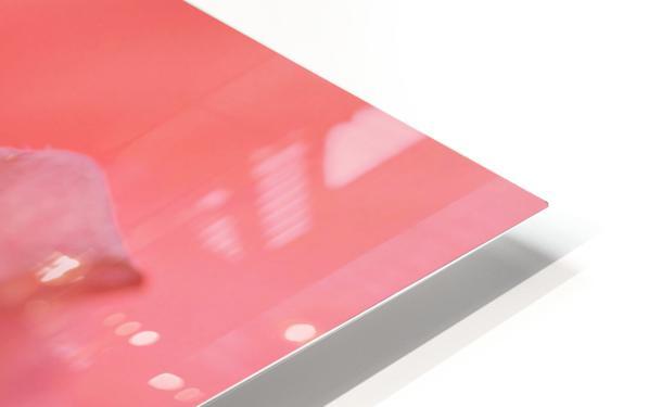 Double Peach Hibisicus HD Sublimation Metal print