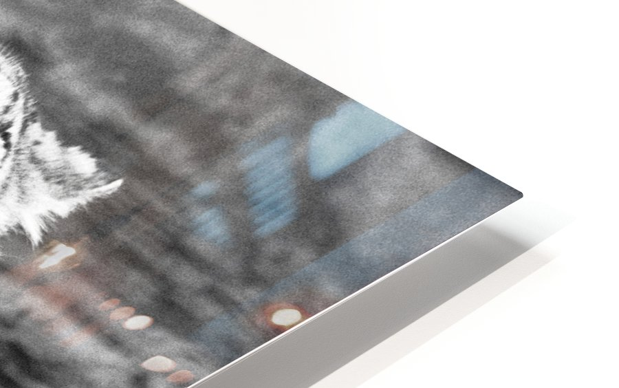 SNOW LEOPARD HD Sublimation Metal print