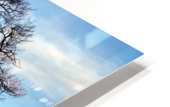 Shubenacadie Tree HD Sublimation Metal print
