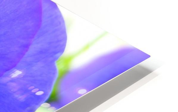 Blue Flowers Photograph HD Sublimation Metal print