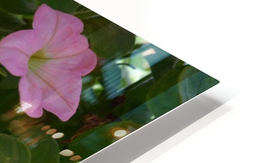 Pink Flowers Photograph HD Sublimation Metal print