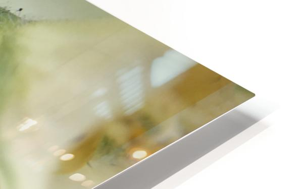 IMG_3383 HD Sublimation Metal print