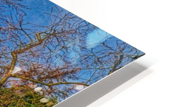 Fox on the roof HD Sublimation Metal print