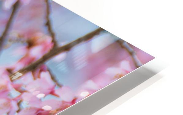 Bird In Sakura Cherry Blossom Tree HD Sublimation Metal print