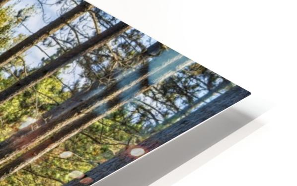 Stand of Trees HD Sublimation Metal print