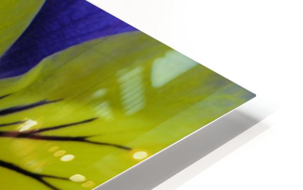 Yellow Pansy Photograph HD Sublimation Metal print