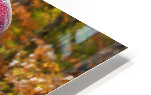Sandhill Crane HD Sublimation Metal print
