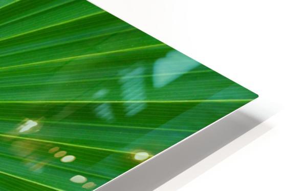 Palm tree detail HD Sublimation Metal print