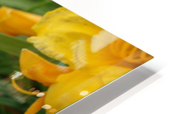 Yellow Lilly HD Sublimation Metal print