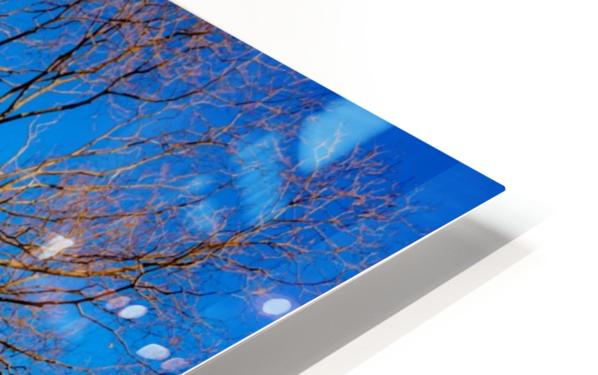 Seneca Springtime HD Sublimation Metal print
