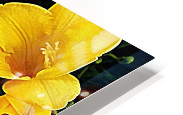 Yellow Freesias HD Sublimation Metal print
