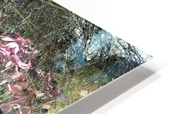 Echinacea HD Sublimation Metal print