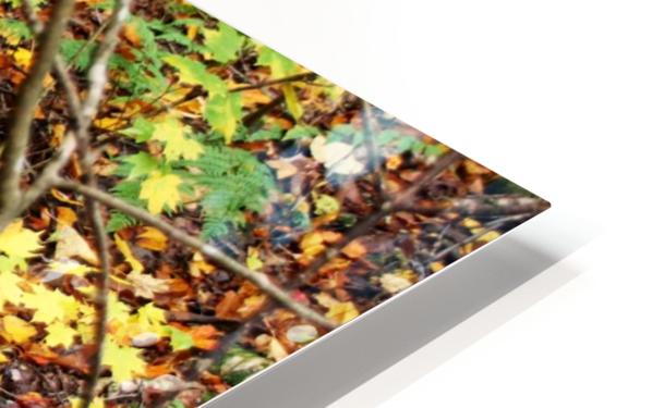 Autumn Flow HD Sublimation Metal print