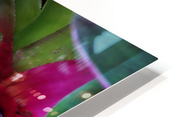 Bromeliad HD Sublimation Metal print