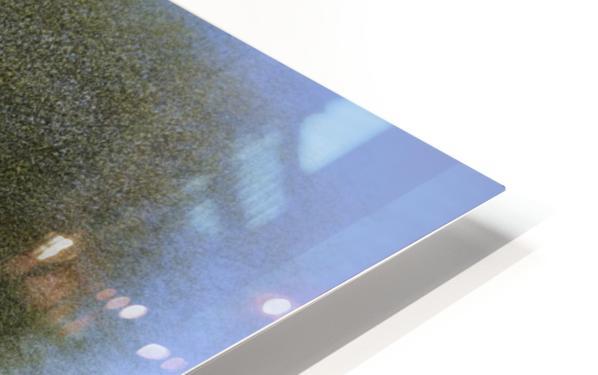 Ceiba speciosa HD Sublimation Metal print