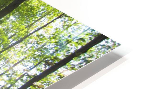 Landscape (51) HD Sublimation Metal print