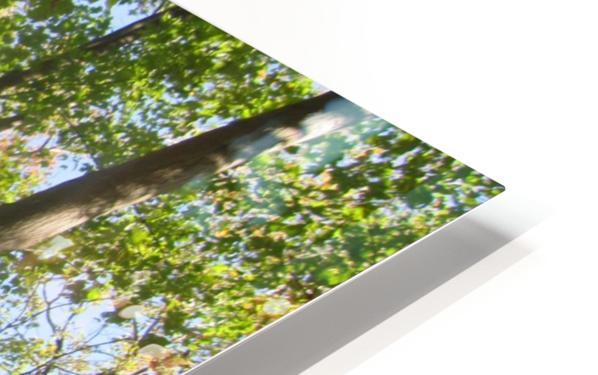 Landscape (108) HD Sublimation Metal print