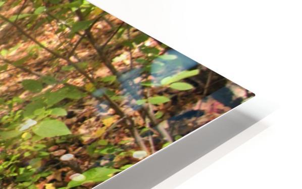 Landscape (105) HD Sublimation Metal print
