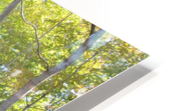 Landscape (288) HD Sublimation Metal print