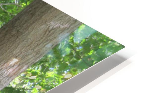 Landscape (266) HD Sublimation Metal print