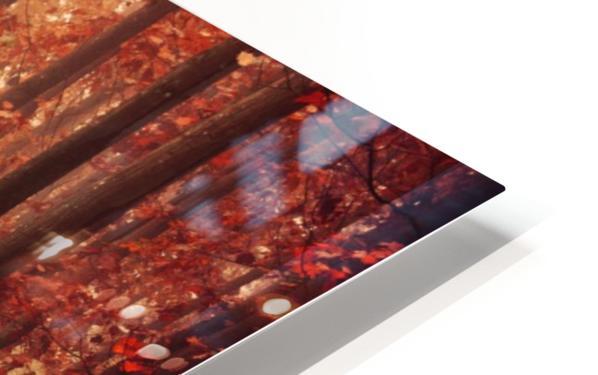 Colorful autumn forest HD Sublimation Metal print