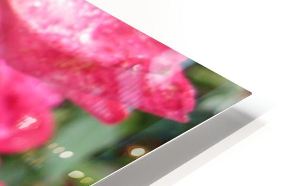 Flower (9) HD Sublimation Metal print