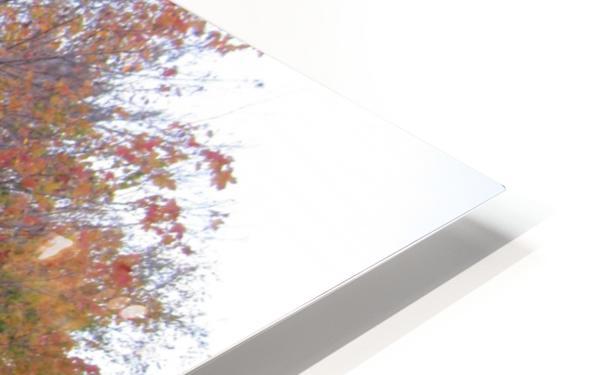 Fall Season (11) HD Sublimation Metal print