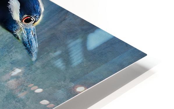 Night Heron Blues HD Sublimation Metal print