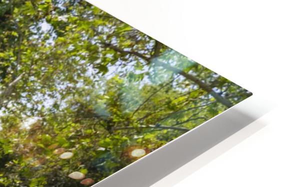 IMG_1512 HD Sublimation Metal print